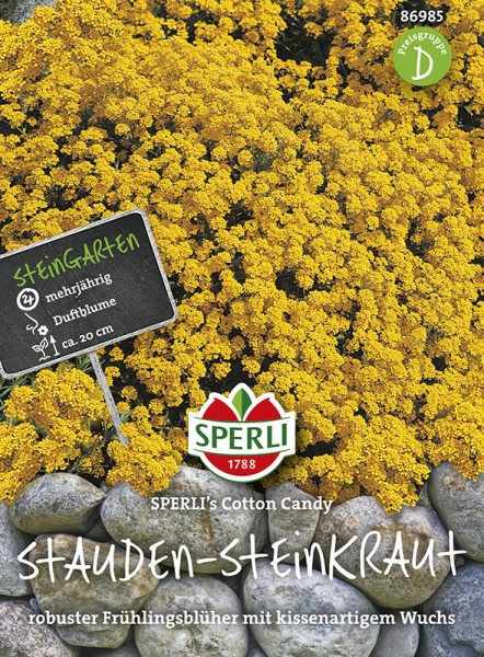 SPERLI Stauden-Steinkraut 'Sperli's Cotton Candy'