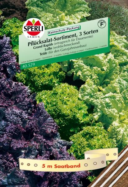 Sperli Pflücksalat-Sortiment, 3 Sorten