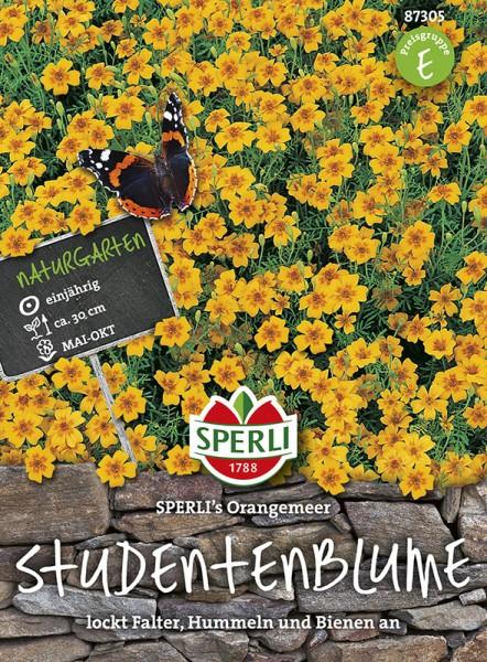 SPERLI Studentenblume 'SPERLI's Orangemeer'