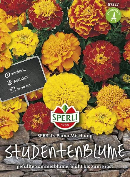 SPERLI Studentenblume 'SPERLI's Plano Mischung'