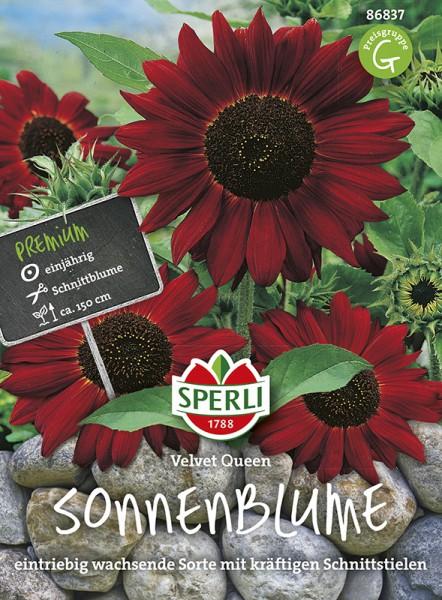 SPERLI Sonnenblume 'Velvet Queen'