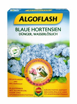 Compo Blaue Hortensien