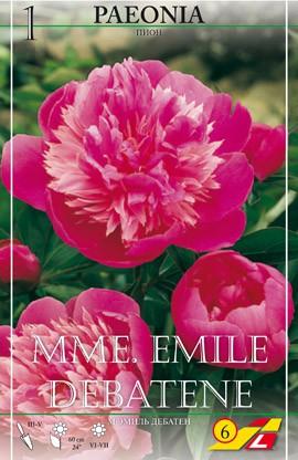 Pfingstrose ;Mme. Emile Debatene - 1 Stück