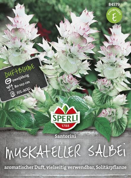 SPERLI Muskateller-Salbei 'Santorini'