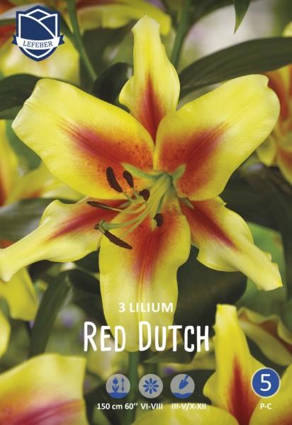 Orientalische Lilie - Red Dutch - 3 Stück