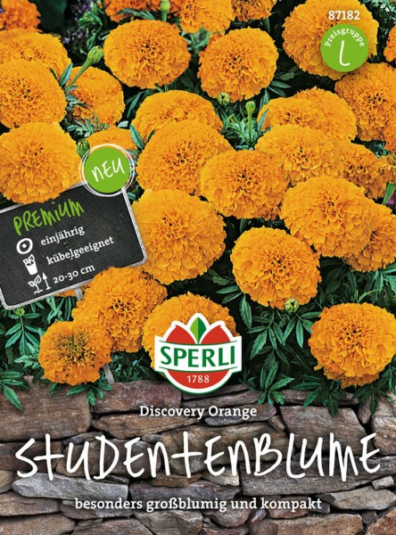 Sperli Studentenblume Tagetes 'Discovery Orange'