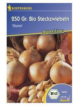 Bio-Frühlingssteckzwiebeln Sturon- 125 Stück