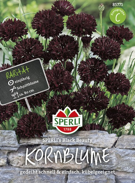 SPERLI Kornblume 'Sperli´s Black Beauty'