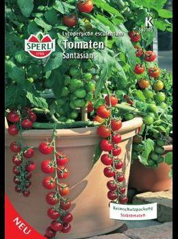 Bio Tomaten Zuckertraube