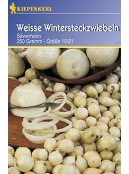 Weiße Wintersteckzwiebeln;Silvermoon - 50 Stück