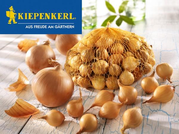 KIEPENKERL Steckzwiebeln Stuttgarter Riesen - 250g