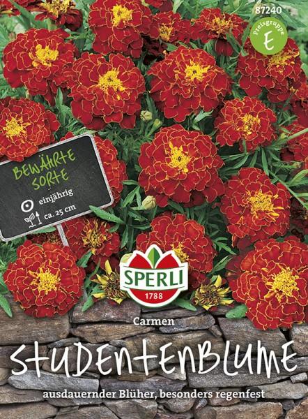 SPERLI Studentenblume 'Carmen'