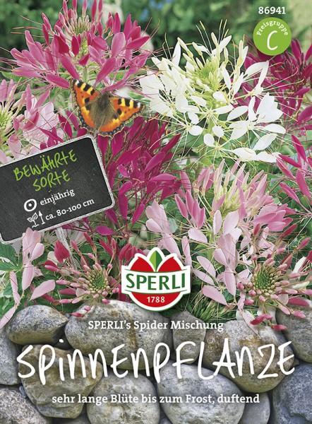 SPERLI Spinnenpflanze 'SPERLI's Spider Mischung'