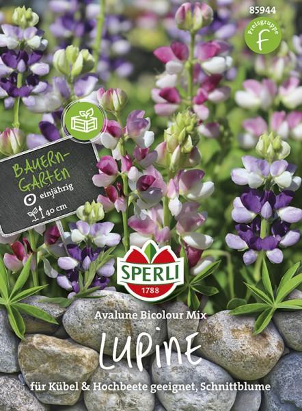 SPERLI Lupine 'Avalune Bicolour Mix'