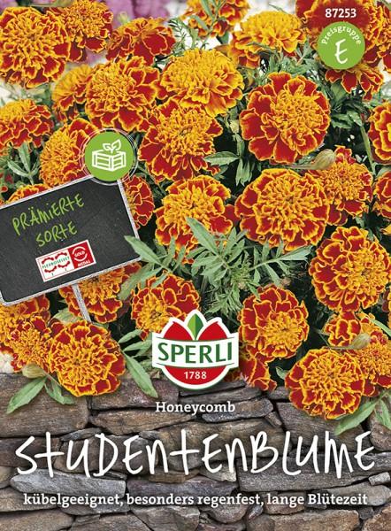 SPERLI Studentenblume 'Honeycomb'