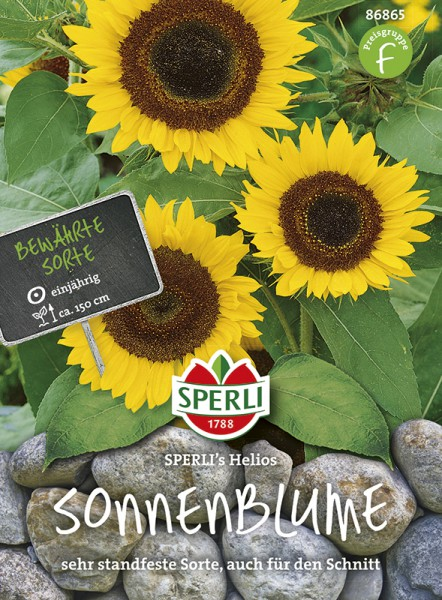 SPERLI Sonnenblume 'SPERLI's Helios'