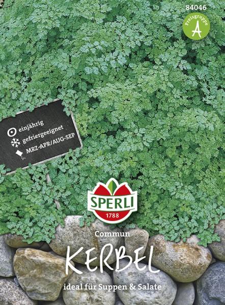 SPERLI Kerbel 'Commun'