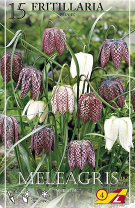 Fritillaria meleagris/Schachbrettblume(Mischung) - 15 Stück