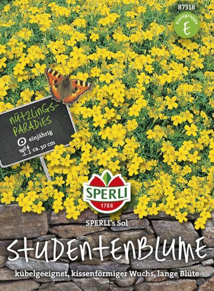 SPERLI Studentenblume 'SPERLI's Sol'