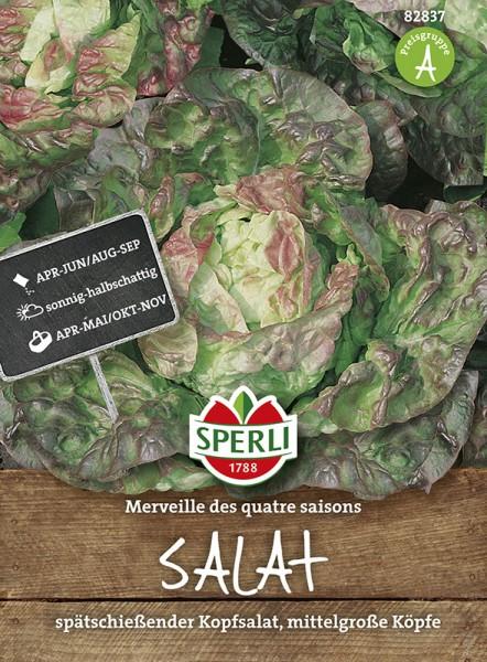 SPERLI Kopfsalat 'Merveille des quatre saisons'